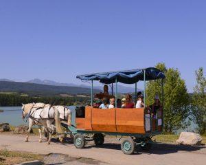 voyage-attelage-chevaux-trait-131819-1_w1000